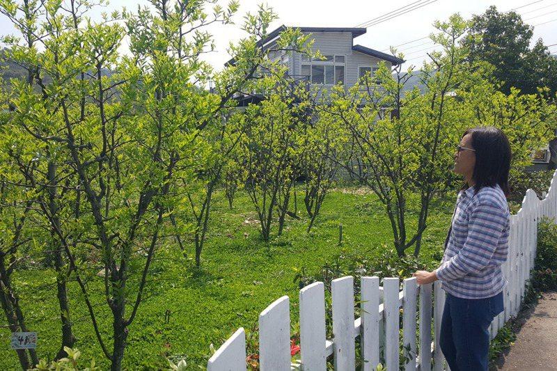 陳淑慧從「公館移居到公館」,從栽種紅棗邁出農村創生的連串步伐。記者胡蓬生/攝影