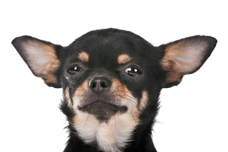 狗狗示意圖。 圖/ingimage