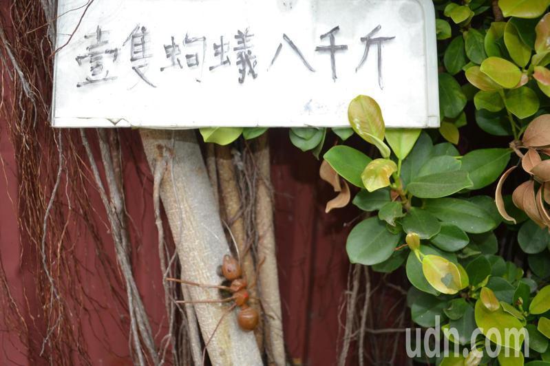 台南市南區灣裡港仔口居民將在地流傳已久的笑話,設置讓人會心一笑的景致。記者鄭惠仁/攝影