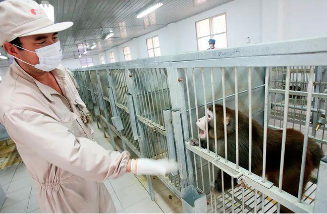 大陸養殖人員檢查用於出口的實驗猴。(新華社)