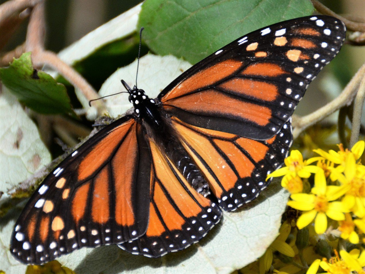 希臘神話中,蝴蝶是女神賽姬(Psyche)的化身,她的美麗傾倒眾神。我當時認為,...