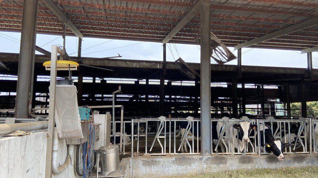 台中目前有42處養牛場、4000頭牛隻,市府4月16日已完成相關臨床訪視及宣導工...