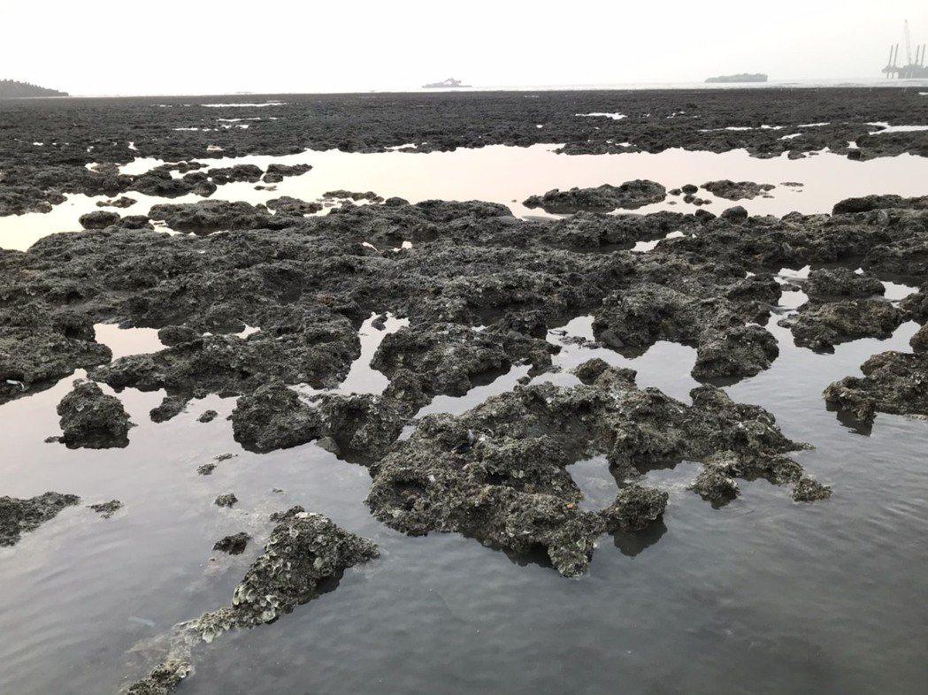 大潭藻礁。本報資料照片