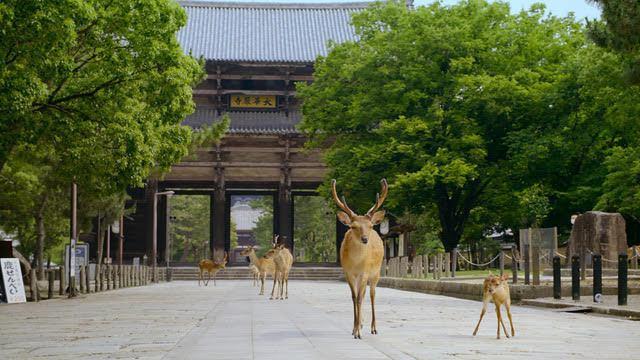 「這一年,地球變得不一樣」曝光奈良小鹿的近況。圖/Apple TV+提供