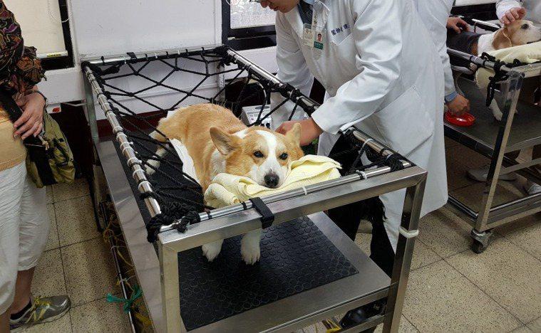 狗狗的健康需要主人細心觀察照料。本報資料照