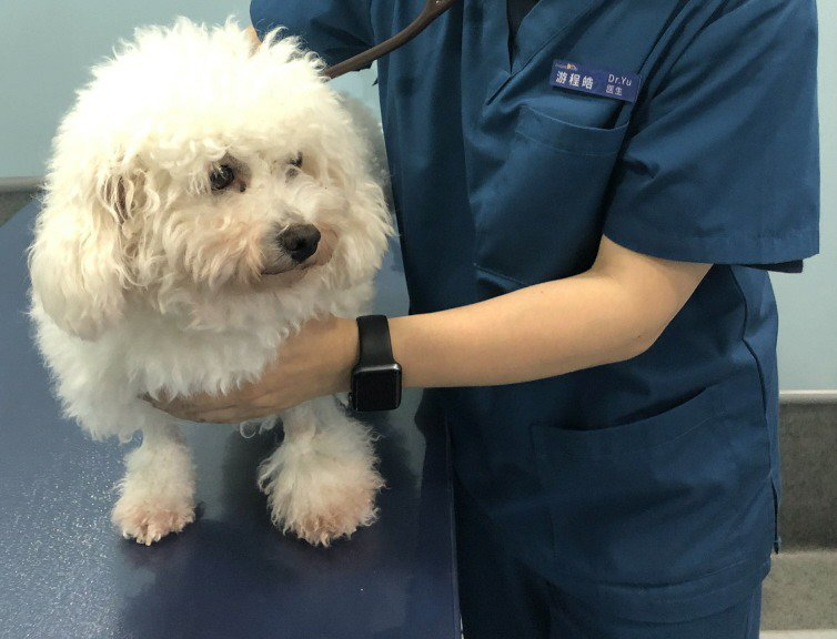 犬舍咳是狗的常見呼吸道疾病。中新社