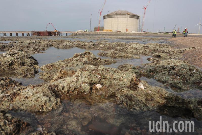 桃園大潭藻礁。記者許正宏/攝影