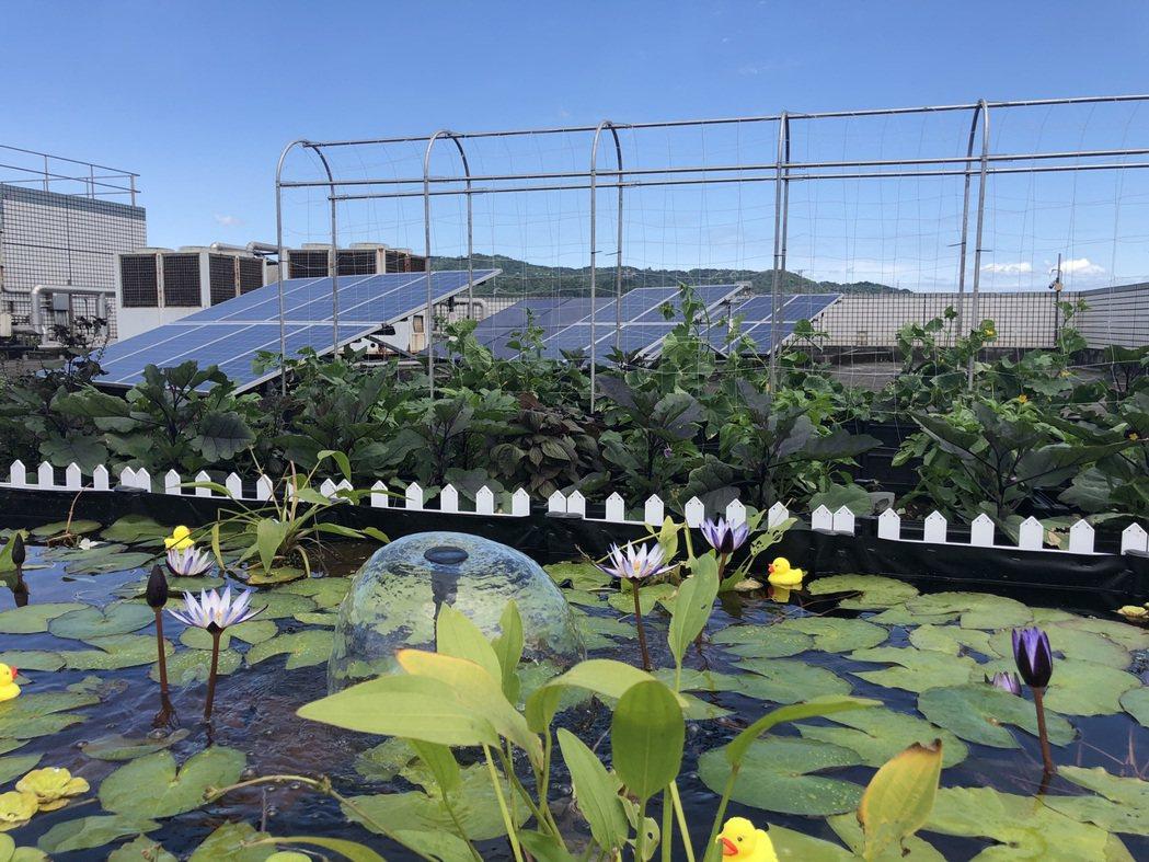 鴻海很用心的在土城總部頂樓設置小花園,打造都市空中花園,為改善都市熱島效應盡一份...