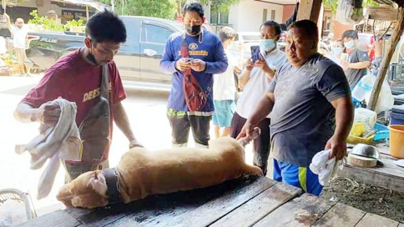 泰國1名男子日前在睡夢中被比特犬攻擊,最終傷重不治。(網上圖片)
