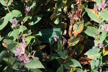 從冰島巴黎德州到台中新社,植物藝術家廖浩哲:觀察植物,更瞭解台灣的珍貴