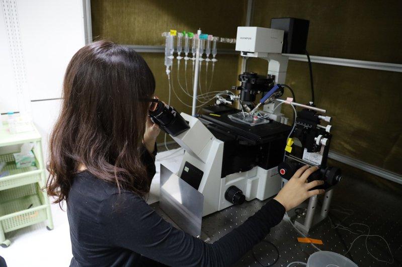 國立陽明交通大學去年成立醫師工程師組,在醫學系培育兼具醫學與電資雙專業的跨域人才,目前共有10名醫師工程師組學生,今年將再招收新生。圖/陽明交大提供
