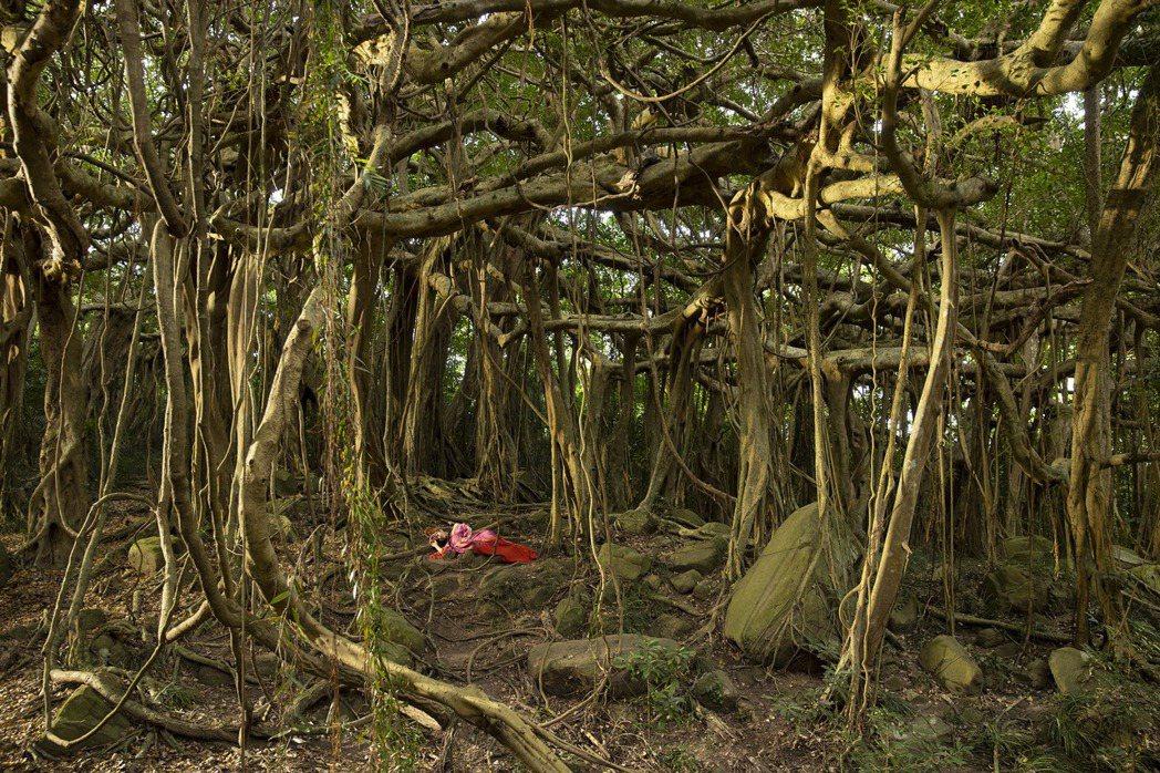 屏東「一樹成林」的白榕園首次開放讓Jolin進行MV拍攝。圖/凌時差提供