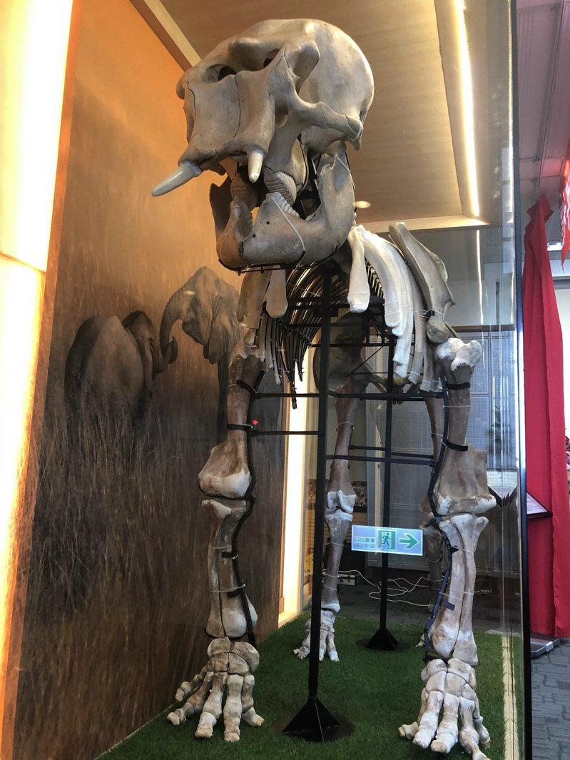 「丸子小姐」長約1.8米,寬約1米,頭頂高1.9米。記者周宗禎/攝影