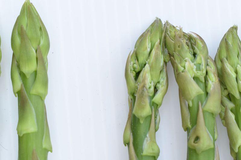 品質佳的蘆筍筍間緊密飽滿(左)。圖/台南區農改場提供