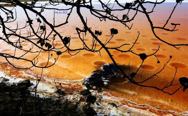 台南七股鹽田呈現如火星地表爆紅。圖/林秋蘭提供