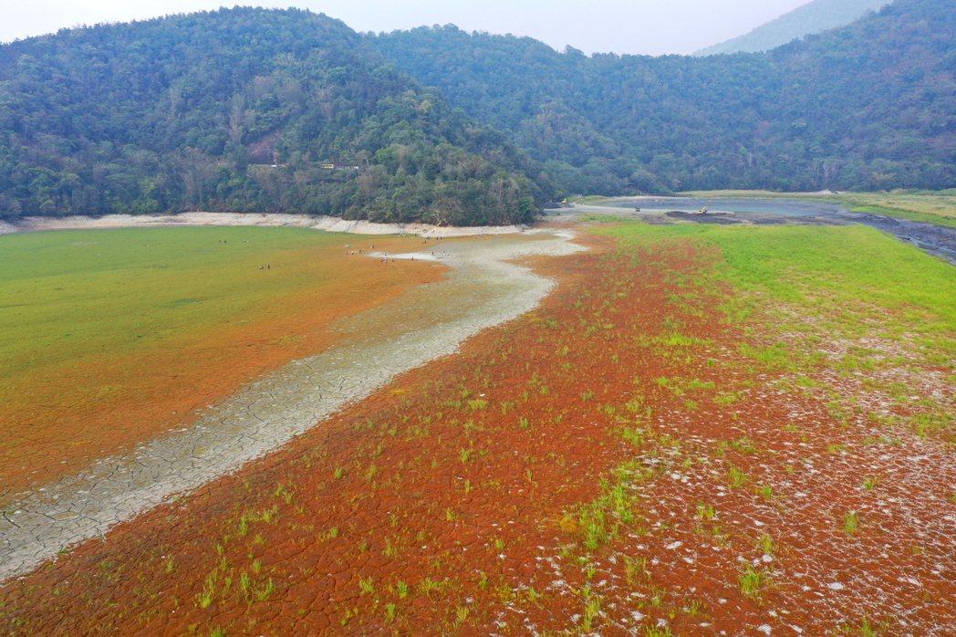 原本波光瀲灩的日月潭,因為缺水而露出大片青青草原。記者許正宏/攝影