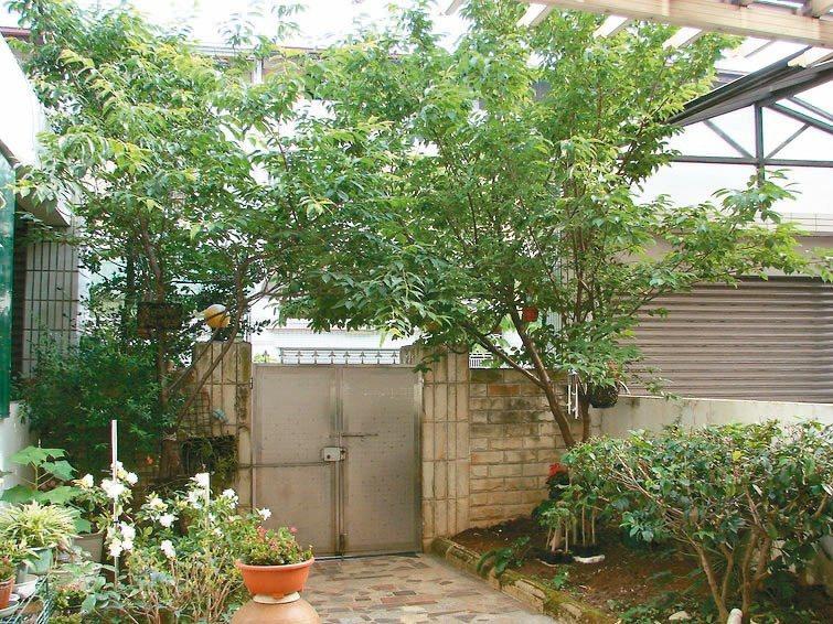 住透天厝有超前部署的庭園,隨時都能養眼舒心,賞花聽鳥鳴。圖/陳金鳳提供