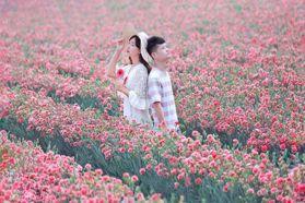 彰化「康乃馨花田」升級了!母親節最應景花海,加碼彩色花景、摩艾石像都好拍