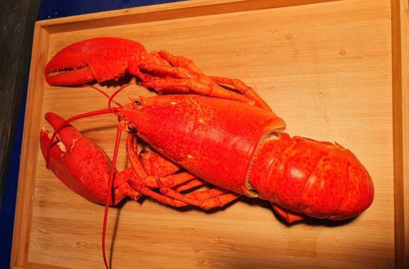 紅色大龍蝦看起來十分誘人。 圖/Tree法式餐廳提供