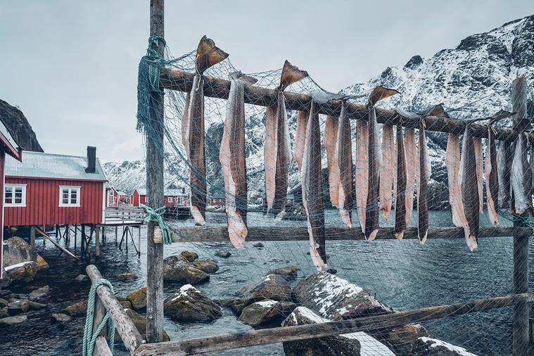 二〇一四年,人類所消耗的魚肉中,養殖魚的數量首次超越野外的漁獲量。 圖/ingi...