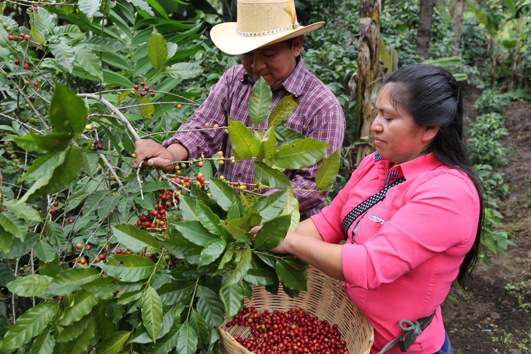 國合會每年派出超過200位專家,前往台灣邦交國及友好國家提供協助。在瓜地馬拉,也...