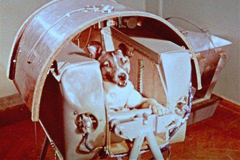 萊卡被裝置在極小空間的太空艙中,僅能站、臥,無法轉身。艙內有氧氣供應及二氧化碳回...