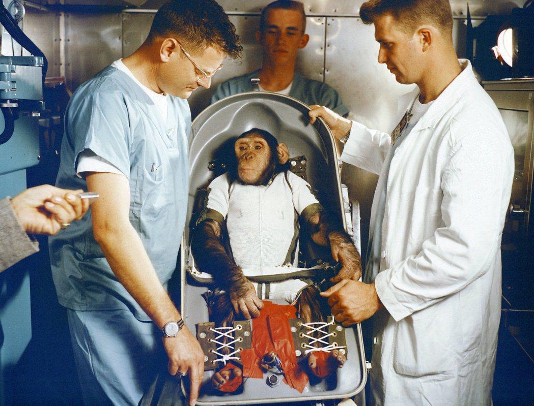 圖為第一隻被送上太空的黑猩猩漢姆,牠同時也是被納入NASA水星計畫的黑猩猩之一。...