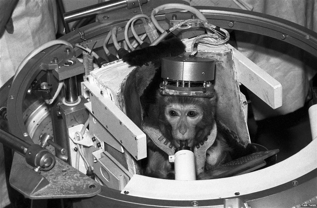 圖為當時成功超越卡門線的艾爾伯特二世,最高飛行至134公里,成為第一隻進入太空的...