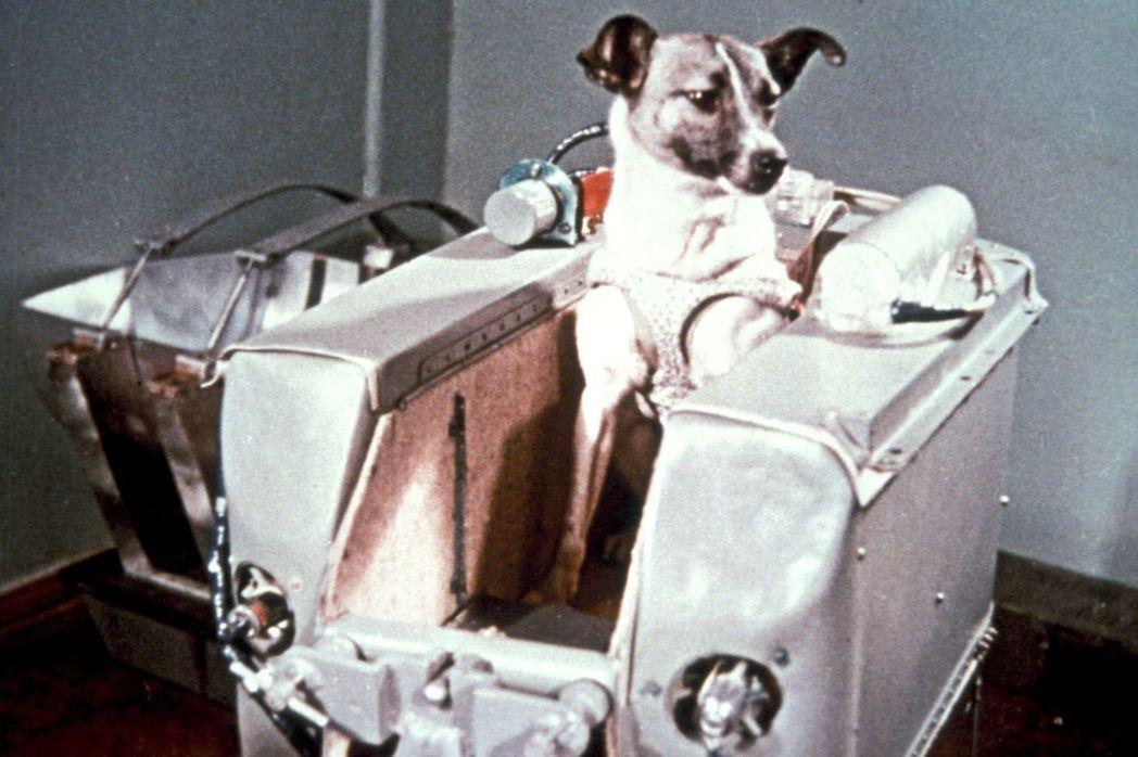 圖中的太空犬——「萊卡」(Laika),原本是一隻流連於莫斯科街頭的流浪犬。但在...