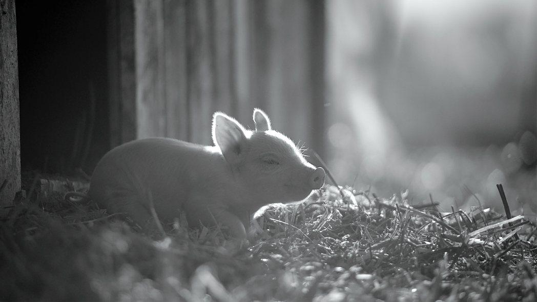 《農場我的家》劇照。 圖/Neon