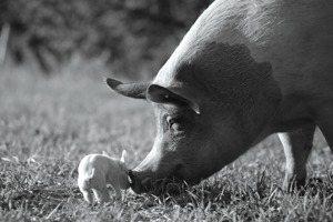 《農場我的家》:喧囂後的寂靜,人類無法想像的動物生命體驗