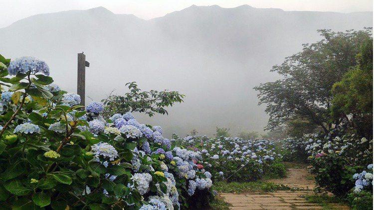 園區內會灑水霧,花與樹繡球花園頓時就是一個靈氣逼人的仙境 引用來源/竹子湖 花與...