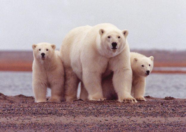 (首圖來源:Flickr/U.S. Fish and Wildlife Service Headquarters CC By 2.0)