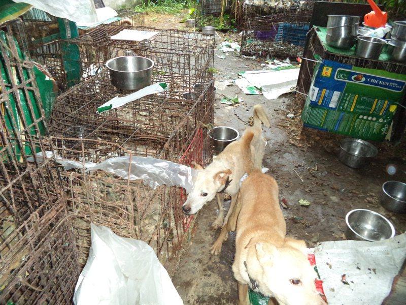 立法院修定動物保護法,把不當飼養、不作為納入虐待範疇,對飼主科處刑責。圖/基市府產發處提供
