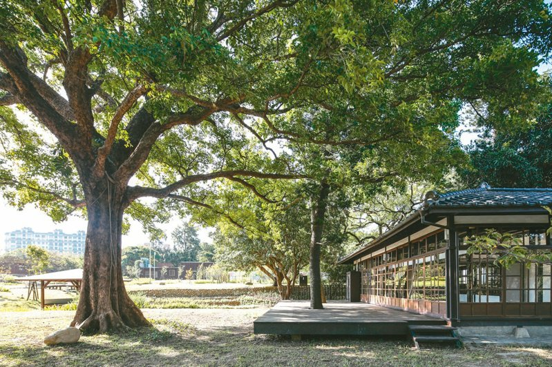 新竹公園的百年茄苳老樹。(圖/聯合報系新聞資料照)