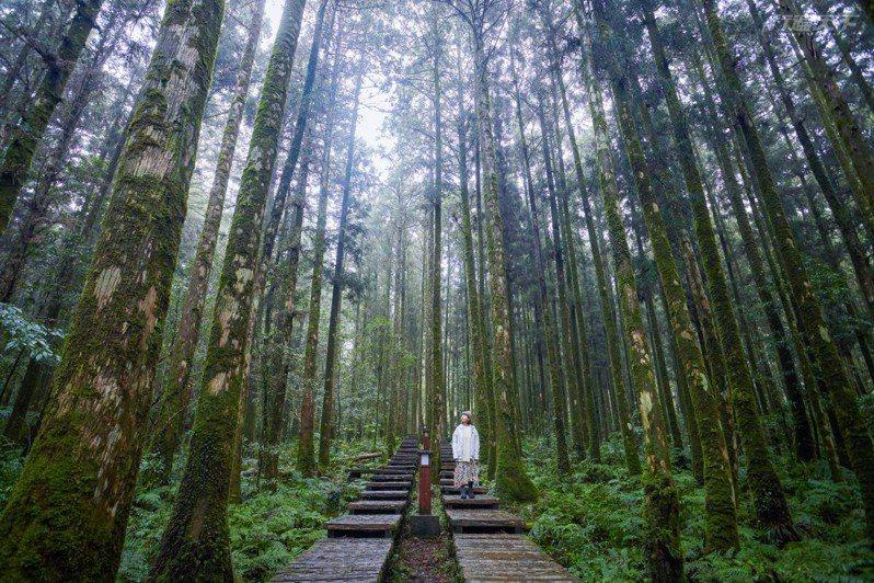 台灣人真的很幸福,幾乎1小時內就能入山,親近森林。