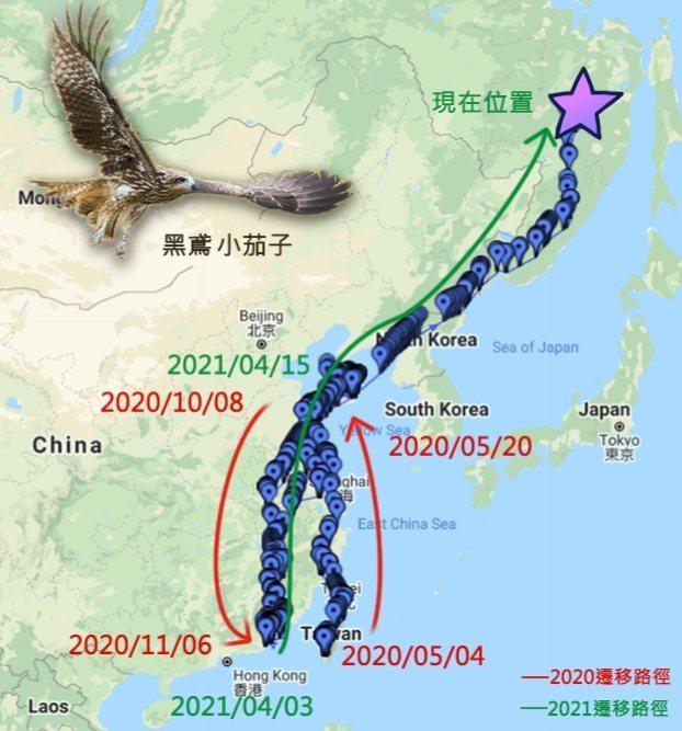 黑鳶小茄子飛行路徑。圖/屏科大鳥類研究室提供
