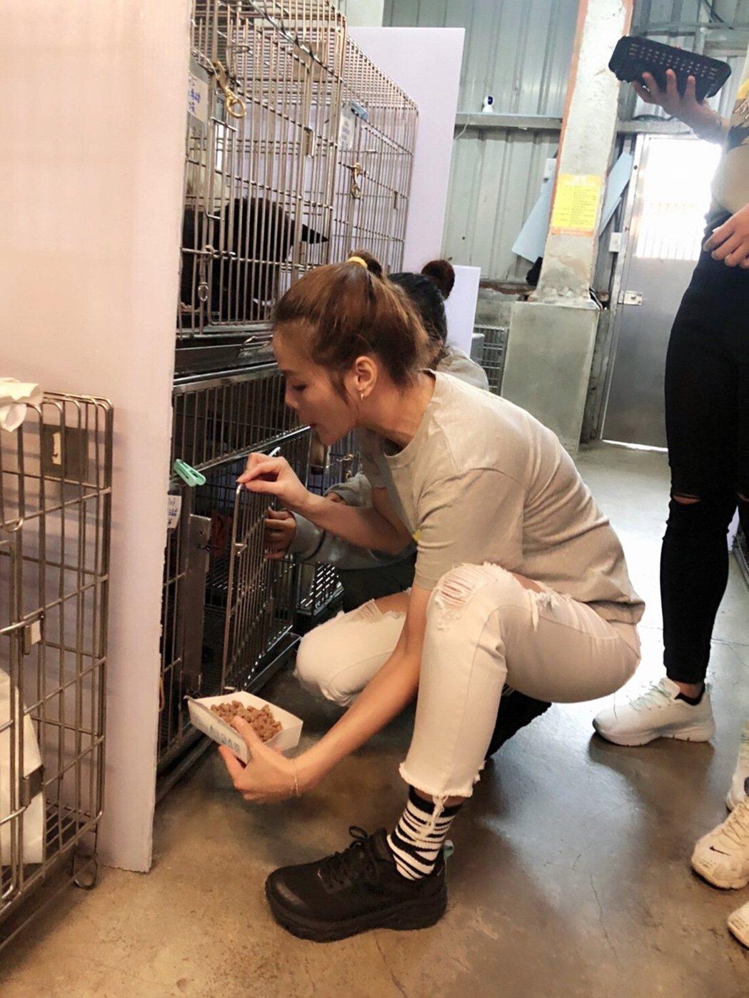 翊萱幫忙餵食流浪狗。圖/艾迪昇傳播提供