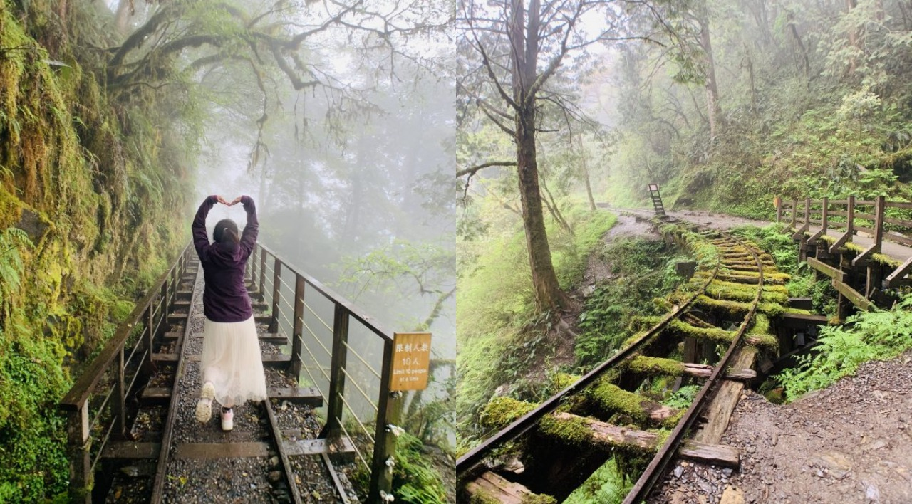 朦朧登山趣!宜蘭太平山「見晴懷古步道」煙雨飄渺甚是浪漫