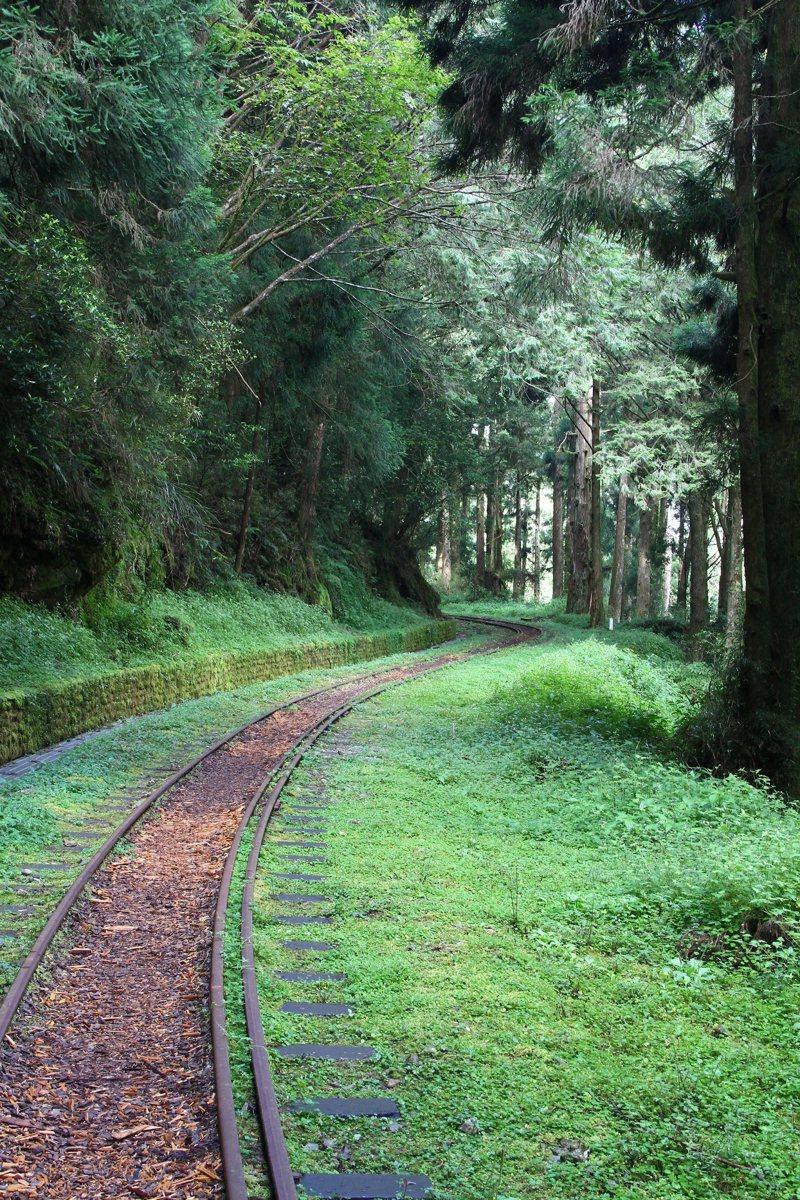 水山步道沿線林相搭配舊時鐵路,是遊樂區內不可錯過的森林療癒秘境。圖/嘉義林管處提供