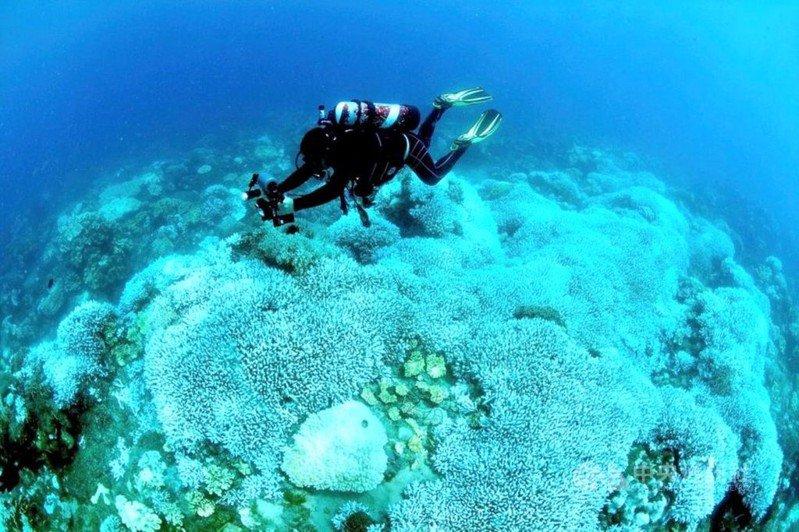 去年夏天台灣發生史上最大規模的珊瑚白化,墾丁海域到今年初觀察有近半數已死亡,原本繽紛的色彩變灰白。圖/蔡永春提供