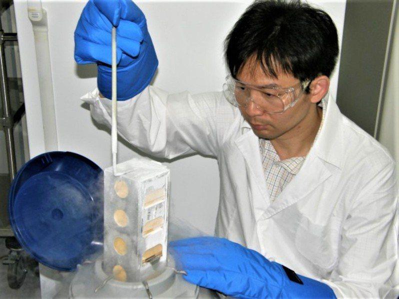 東華大學海洋生物研究所副教授林家興帶領的團隊,運用生物冷凍技術為數十種珊瑚保存基因資訊。圖/林家興提供