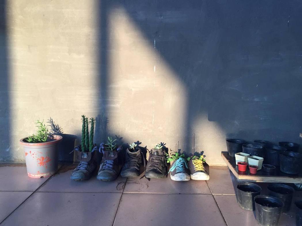 用壞鞋子種植多肉植物。 圖/鄒雅荃提供