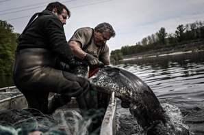 世界漁業危機:數千年海洋開採史,與進退維谷的漁民