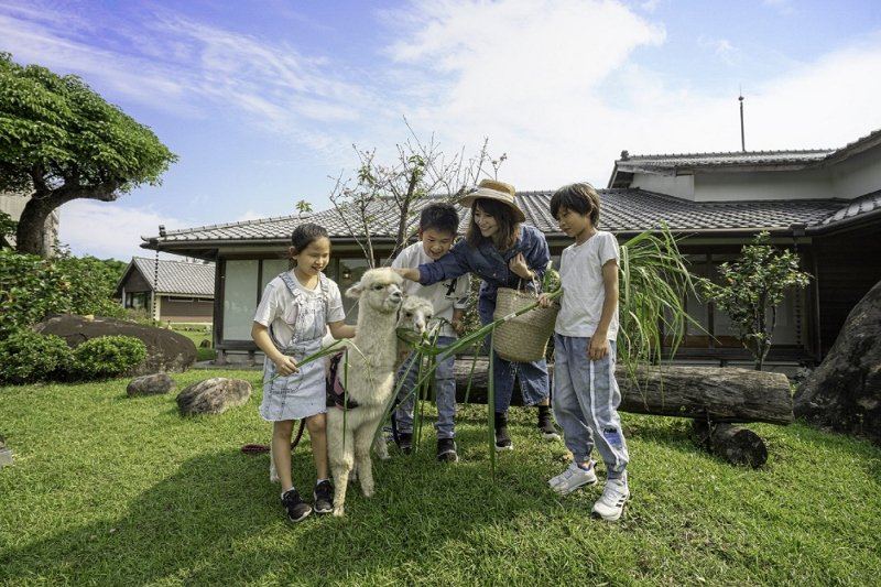 親人的羊駝在日式園區與遊客互動。 綠舞飯店/提供