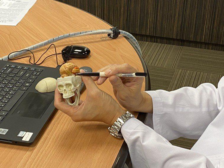 書田診所腦神經內科主任醫師黃啟訓解釋腦下垂體的位置。記者蕭羽耘/攝影