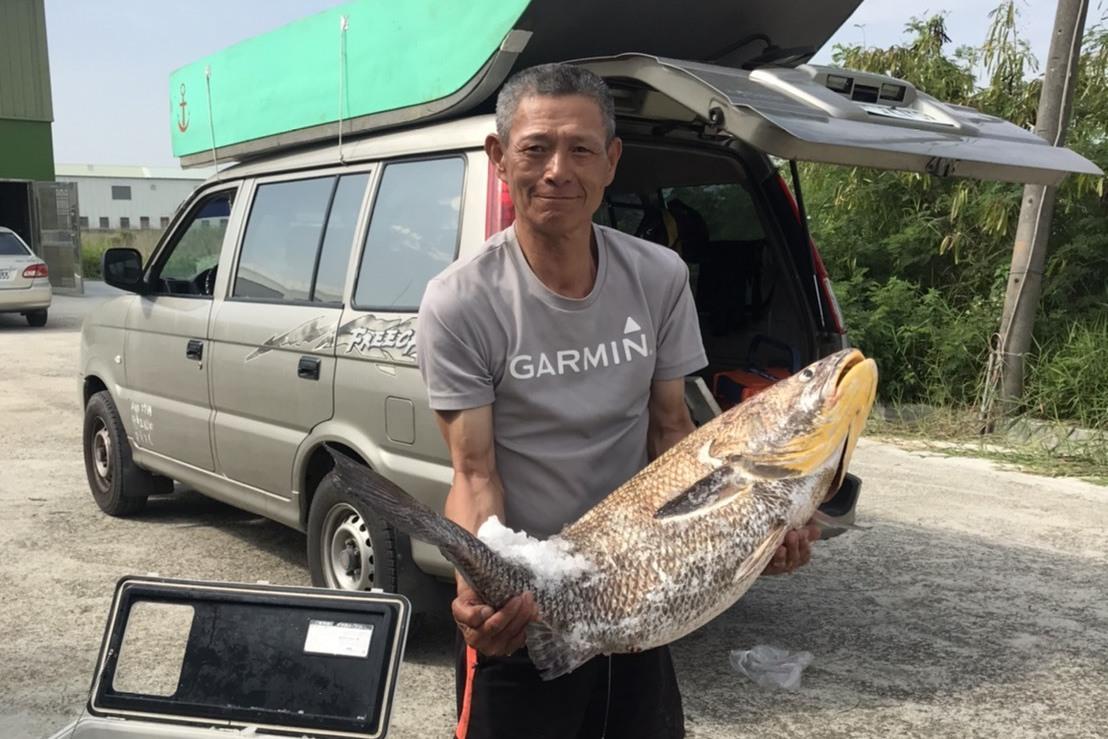 人魚激烈搏鬥!退休校長搭船在東石外海釣到巨無霸鮸魚