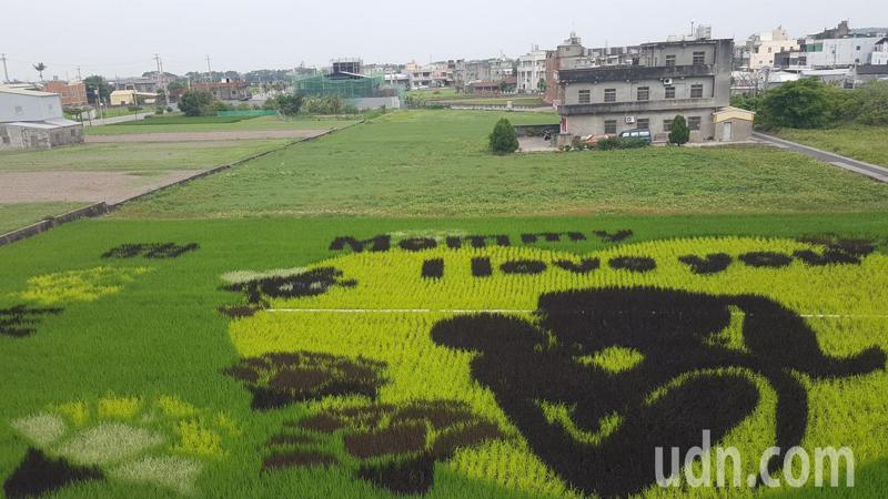 苗栗縣苑裡鎮農會今年一期作稻田彩繪以「Mommy I love you」呈現母親節主題。記者胡蓬生/攝影