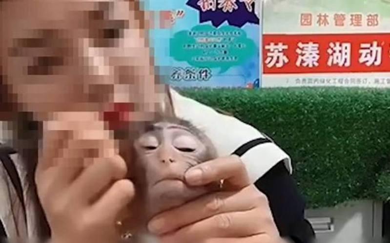 中國大陸一間動物園的動物飼養員為推銷化妝品,竟用眉筆替猴子化妝。圖/取自微博