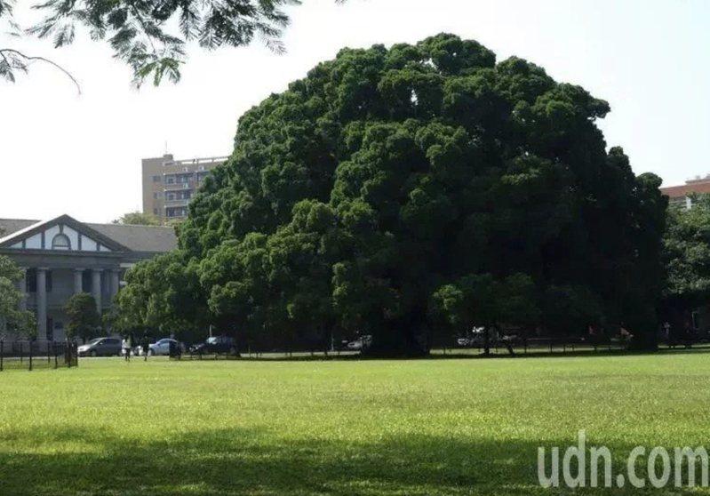 國立成功大學著名地標「榕園」。本報資料照片